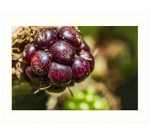 Blackberry Fruit Art Print