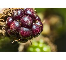 Blackberry Fruit Photographic Print