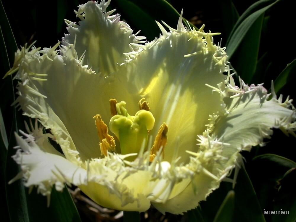 Tulip's Mystery by ienemien