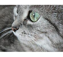 Cat I. Photographic Print