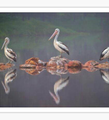 Three Pelicans Sticker