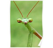 Praying Mantis Poster