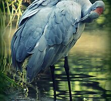 Beautiful Brolga by Karen Tregoning