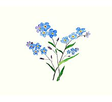 blue forget me not 2 Photographic Print
