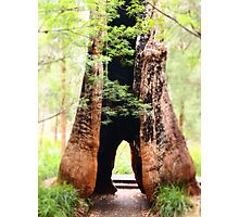 Valley of the Giants Photographic Print