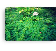 Hortensia inside shrubs Canvas Print