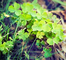 Trefoil leafs by novopics