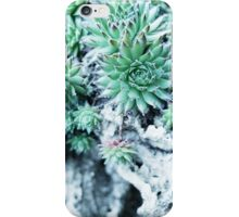 Echeveria at a stone iPhone Case/Skin