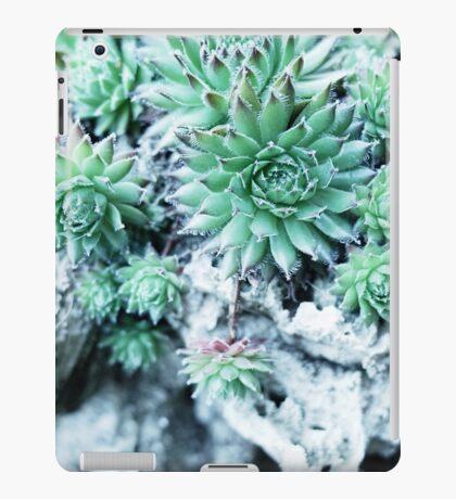 Echeveria at a stone iPad Case/Skin