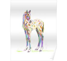 Foal Paint products Poster