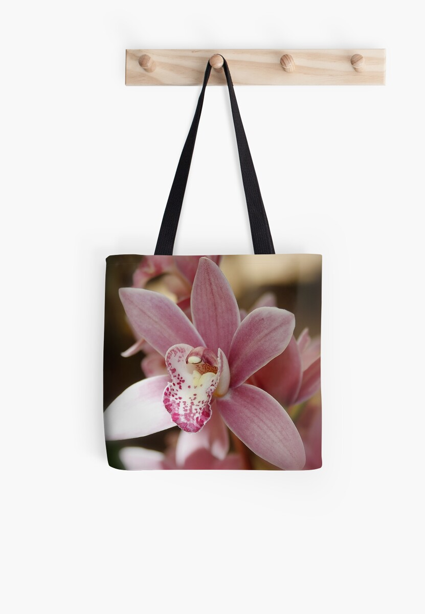 Pink Orchid by AnnDixon