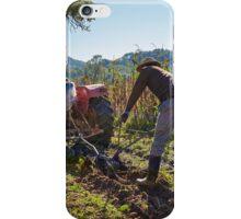 Potatoes harvest iPhone Case/Skin