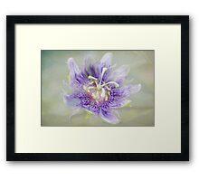 Passion Flower Framed Print