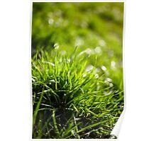 Grass closeup Poster