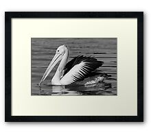 Pelican in Black and White Framed Print