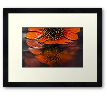 Coneflower water reflection Framed Print