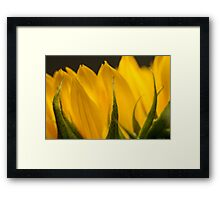 sunflower macro Framed Print