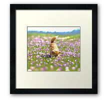 Cute corgi smelling sweet flowers, saffron field, bokeh nature photography Framed Print