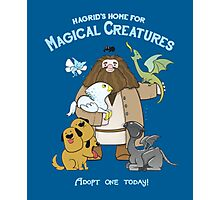 Harry Potter - Magical Creatures  Photographic Print