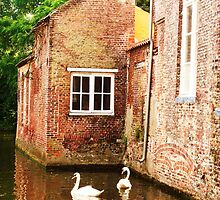 Swans by haroula