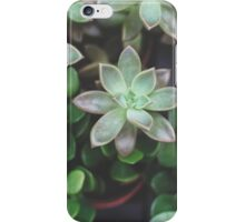 Garden Green Succulents iPhone Case/Skin