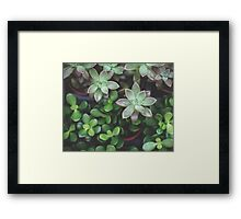 Garden Green Succulents Framed Print