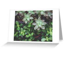 Garden Green Succulents Greeting Card
