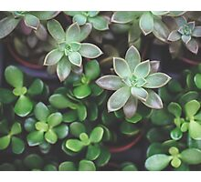 Garden Green Succulents Photographic Print