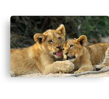 Cuddly cubs Canvas Print