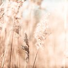 Golden Wheat by Debbra Obertanec