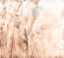 Golden Wheat by Debbra Obertanec
