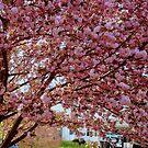 Springtime in Virginia  ^ by ctheworld