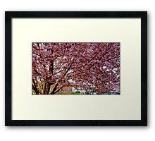 Springtime in Virginia  ^ Framed Print