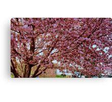 Springtime in Virginia  ^ Canvas Print