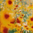 flowers by tobyharvard