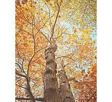 Autumn Inkblot Photographic Print