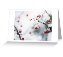 Winter Red Berries Greeting Card