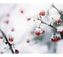 Winter Red Berries Photographic Print