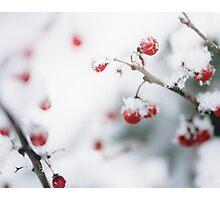 Winter Red Berries Photographic Print