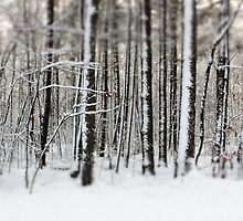 Snowy Woods by Debbra Obertanec