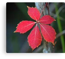 A lonely leaf! Canvas Print