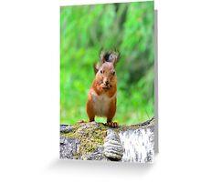 Cute squirrel Greeting Card