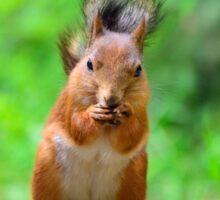 Cute squirrel Sticker