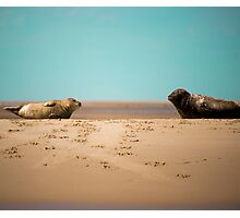 Seal Pup Love Photographic Print