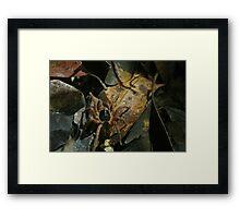 Spider in Undergrowth Framed Print