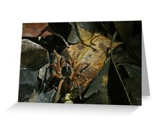 Spider in Undergrowth Greeting Card