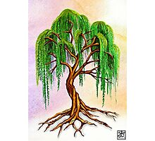 Weeping Tree of Life Photographic Print