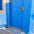 Cat at Kasbah, Rabat by pennyswork