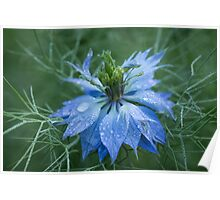 Love in a Mist (dedicated to Lynn Carter) Poster