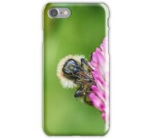 Common carder bee iPhone Case/Skin